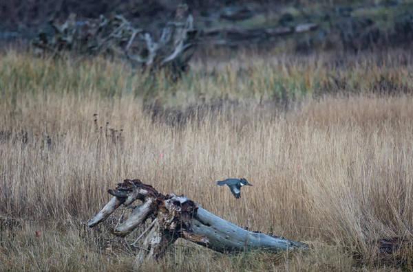Photograph - Kingfisher by Randy Hall