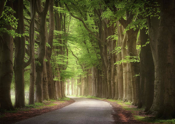 Photograph - Kings Of Spring by Rob Visser