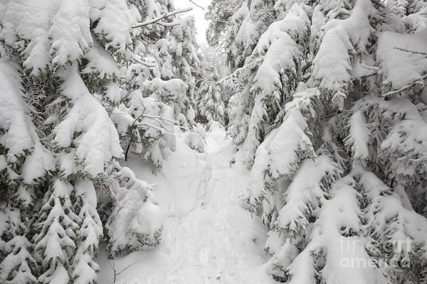 Photograph - Kinsman Ridge Trail - Kinsman Notch, New Hampshire by Erin Paul Donovan