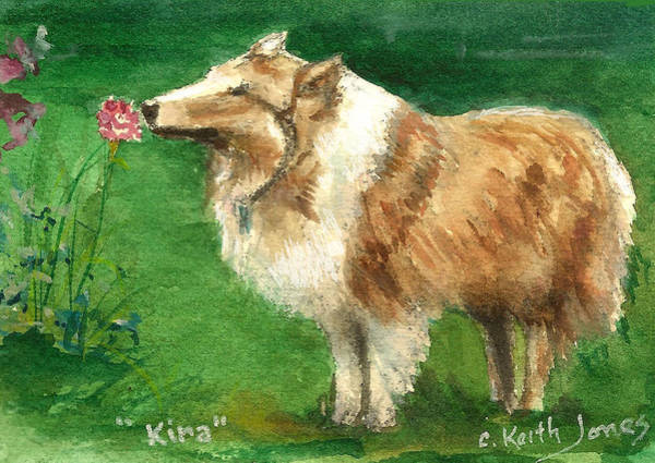 Collie Painting - Kira The Dog by C Keith Jones