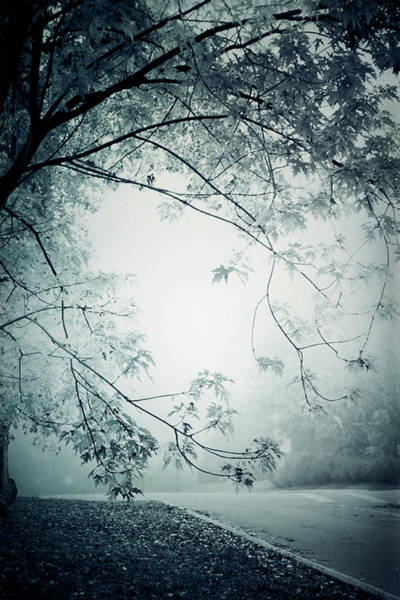 Greyscale Photograph - Kissed By Mist by Maggie Terlecki