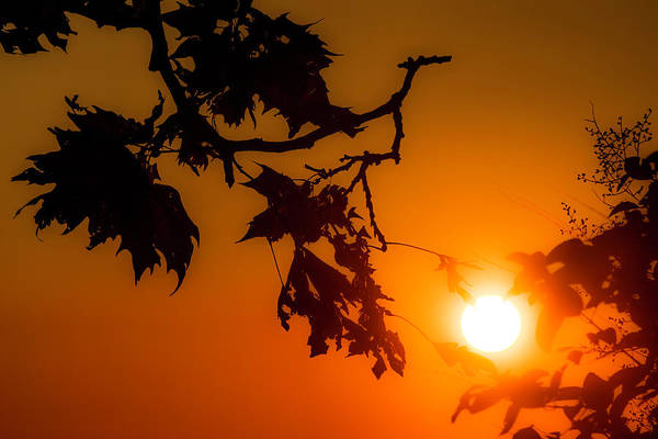 Photograph - Kissed By The Sun by Wolfgang Stocker
