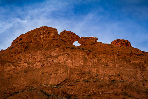 Photograph - Kissing Camels In The Gardens by Ron Pate