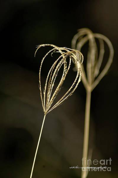 Photograph - Kissing Grass by Vicki Ferrari