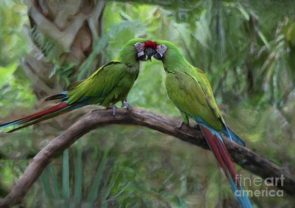 Photograph - Kissing Macaws by Jeff Breiman