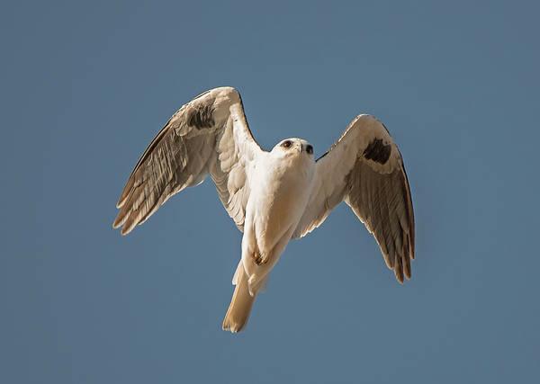 Kite Photograph - Kite In Flight by Loree Johnson