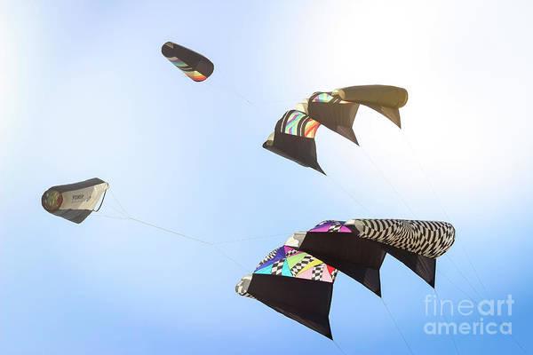 Kite Festival Wall Art - Photograph - Kites  by Colleen Kammerer