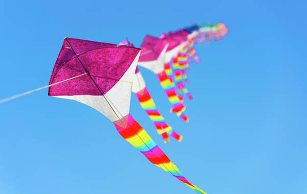 Photograph - Kites by Max Neivandt