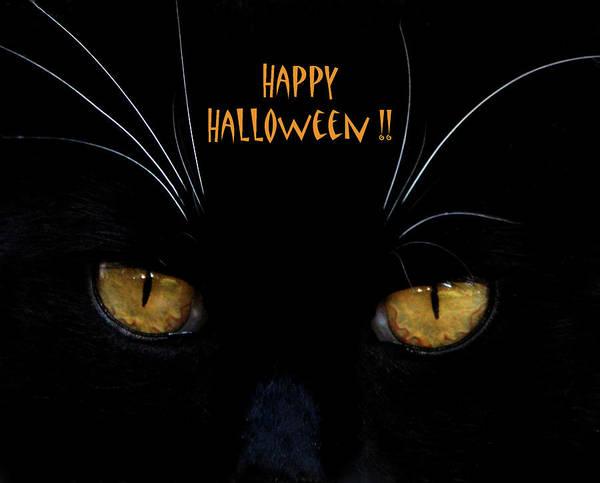 Photograph - Kitkat Halloween Card by Lesa Fine