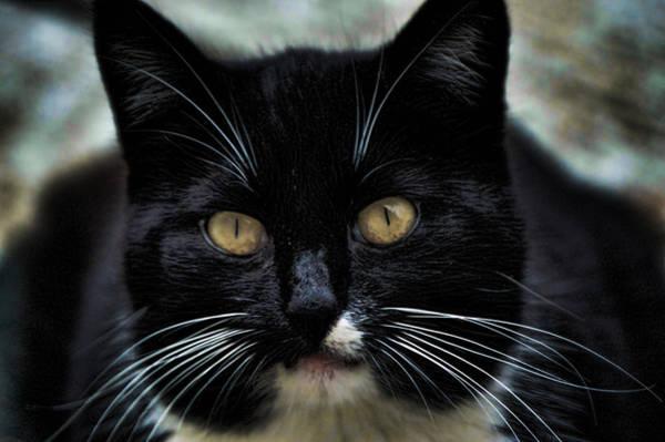 Photograph - Kitkat by Lesa Fine
