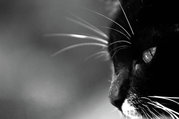 Photograph - Kitkat Profile Bw By Lesa Fine by Lesa Fine