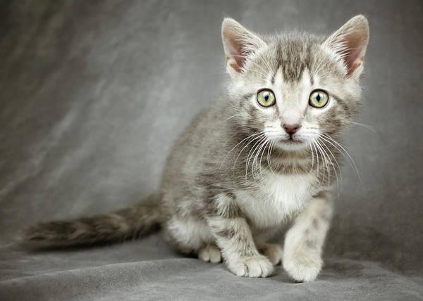 Photograph - Bonus Kitty by Jeanette Fellows