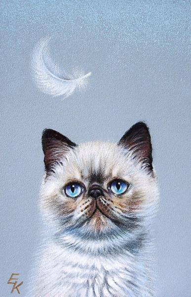 Drawing - Kitten And Feather  by Elena Kolotusha