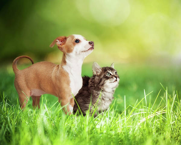 Wall Art - Photograph - Kitten And Puppy In Long Green Grass by Susan Schmitz