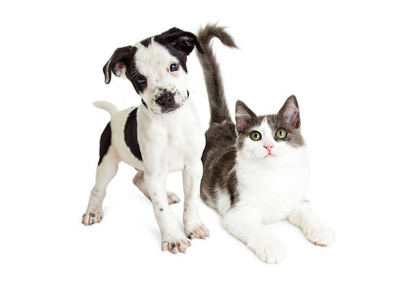 Wall Art - Photograph - Kitten And Puppy Together by Susan Schmitz