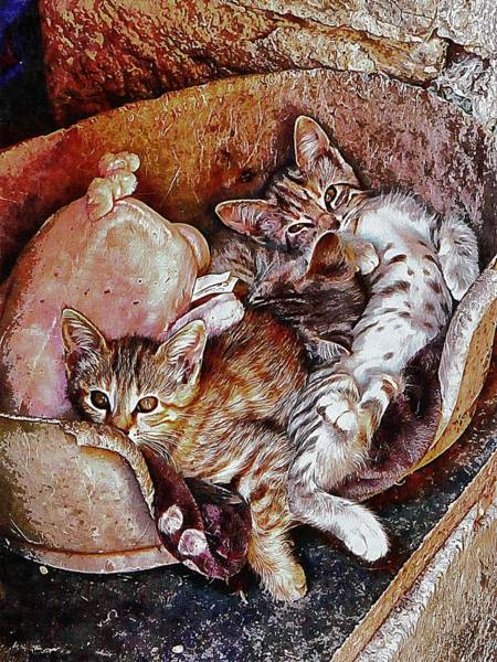 Photograph - Kitten Cuteness Overload by Dorothy Berry-Lound