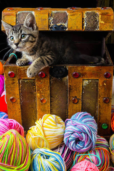 Wall Art - Photograph - Kitten Hiding In Treasure Box by Garry Gay