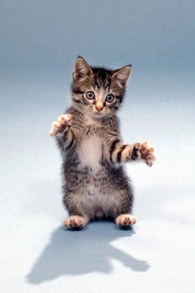 Wall Art - Photograph - Kitten Hug by Gerard Fritz