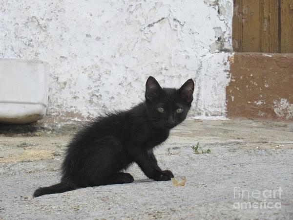 Photograph - Kitten In Iznajar by Chani Demuijlder