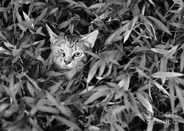 Photograph - Kitten In The Weeds 1 by Patrick M Lynch
