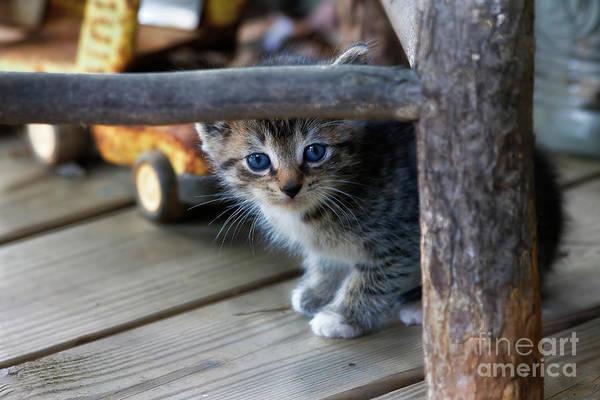 Photograph - Kitten by Jill Lang