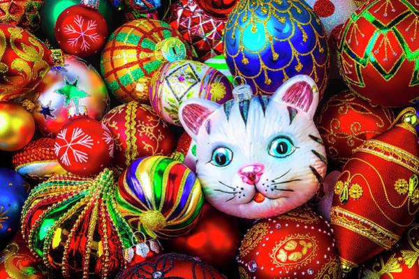 Wall Art - Photograph - Kitten Ornament by Garry Gay