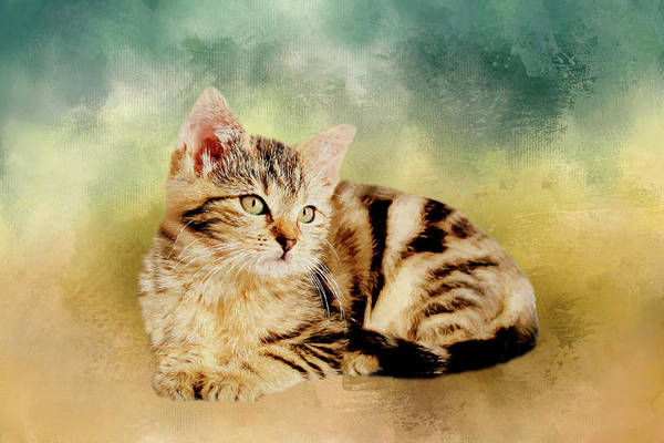 Painting - Kitten - Painting by Ericamaxine Price