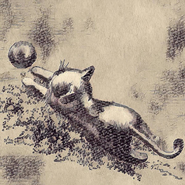 Digital Art - Kitten Playing With Ball by Portraits By NC