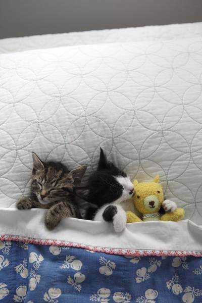 Stuffed Animal Photograph - Kittens In Bed With Toy by Gillham Studios
