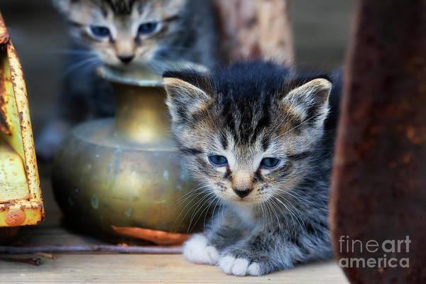 Photograph - Kittens by Jill Lang