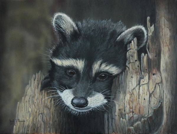 Painting - Kit...the Baby Raccoon by Bob Williams
