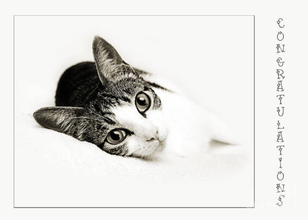 Wall Art - Photograph - Kitty Cat Greeting Card Congratulations by Andee Design