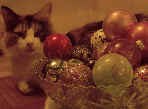 Photograph - Kitty Glow Christmas Card by Anne Cameron Cutri