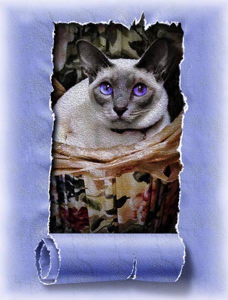 Photograph - Kitty In A Basket by Reynaldo Williams