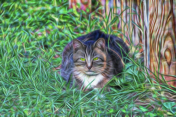 Digital Art - Kitty In The Grass 7892 by Ericamaxine Price