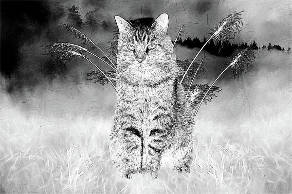 Photograph - Kitty In The Grass - Black And White Sketch by Ericamaxine Price