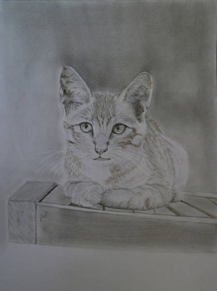 Puss Drawing - Kitty by Maria Woithofer
