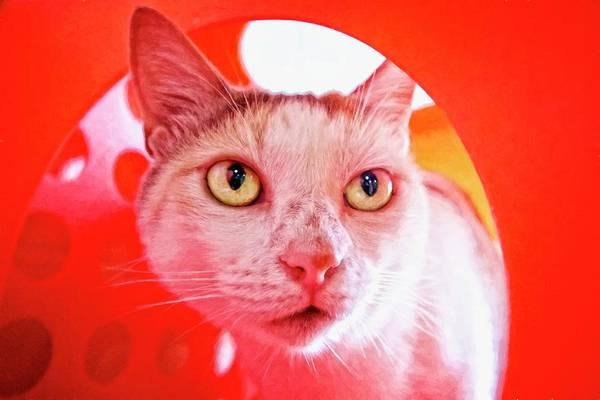 Photograph - Kitty Peeking by Alice Gipson