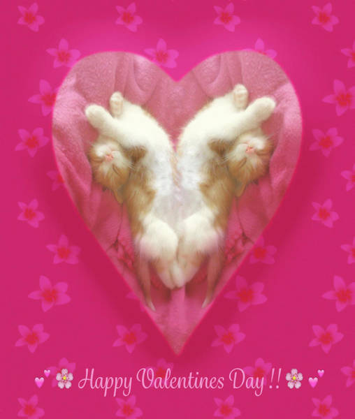 Digital Art - Kitty Valentine by Bonnie Follett