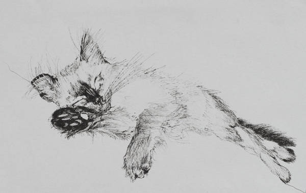 Kitten Drawing - Kitty by Vincent Alexander Booth