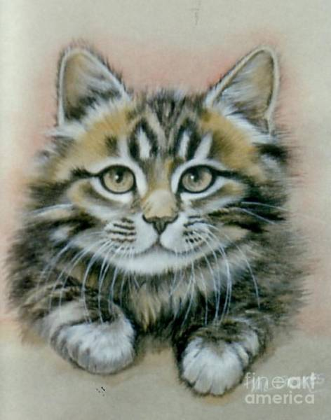Painting - Kittypaws 1 by Val Stokes