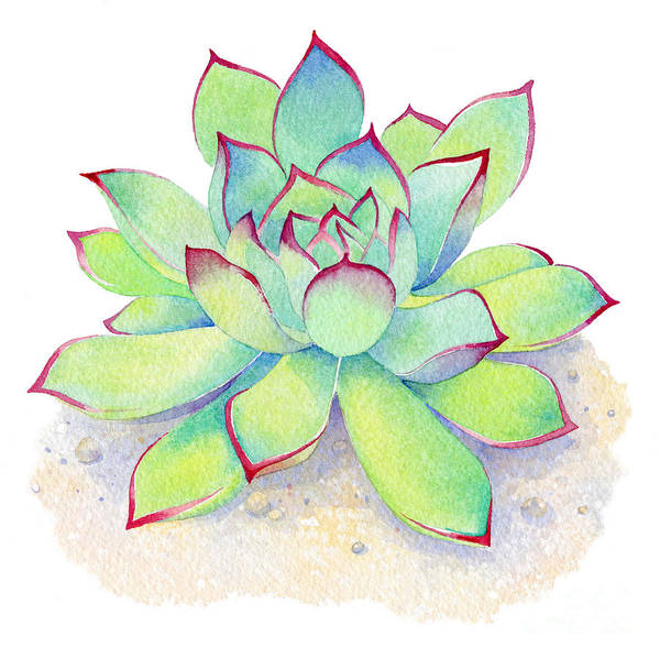 Succulent Wall Art - Painting - Kiwi Aeonium by Laura Nikiel