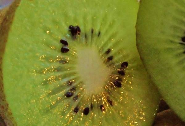 Kiwifruit Photograph - Kiwifruit by Pixel Productions