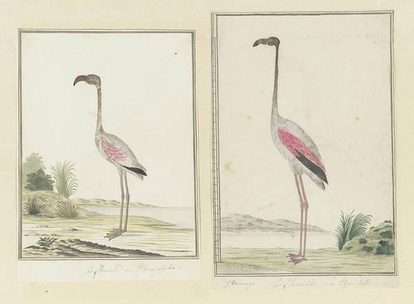 Painting - Kleine Flamingo by Robert Jacob Gordon
