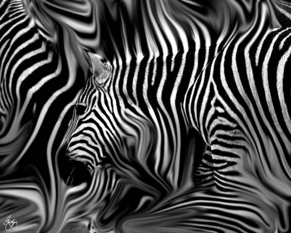Photograph - Knee Deep In Zebras Monochrome by Wayne King