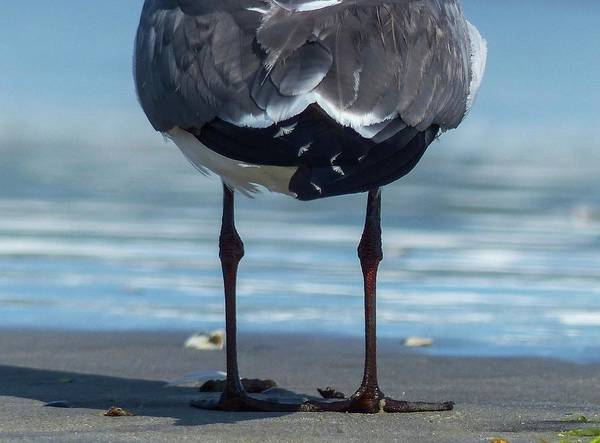 Photograph - Knobby Knees by Rand