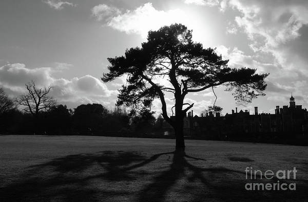 Photograph - Knole Park Shadows 1 by James Brunker