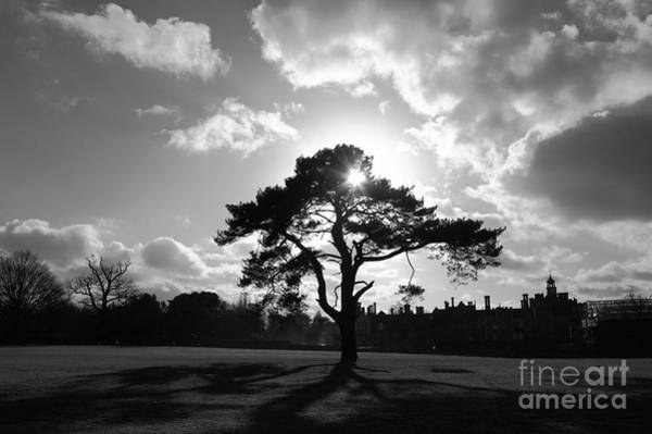 Photograph - Knole Park Shadows 2 by James Brunker