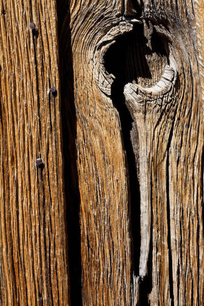 Knot Hole Photograph - Knot Hole by Kelley King