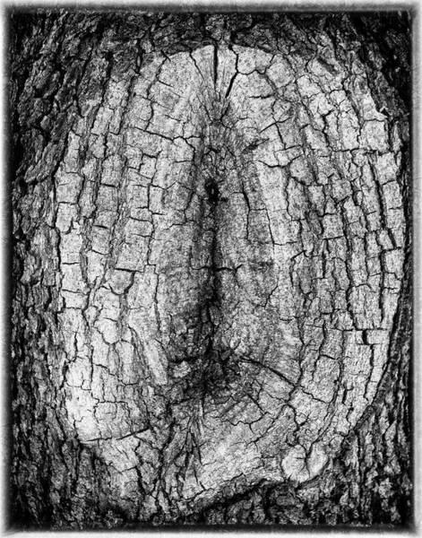 Photograph - Knot  by Michael Raiman